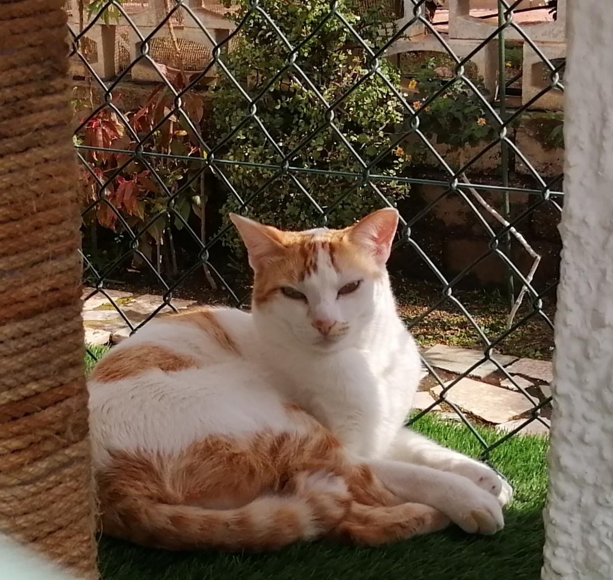 psicologa gatos almeria