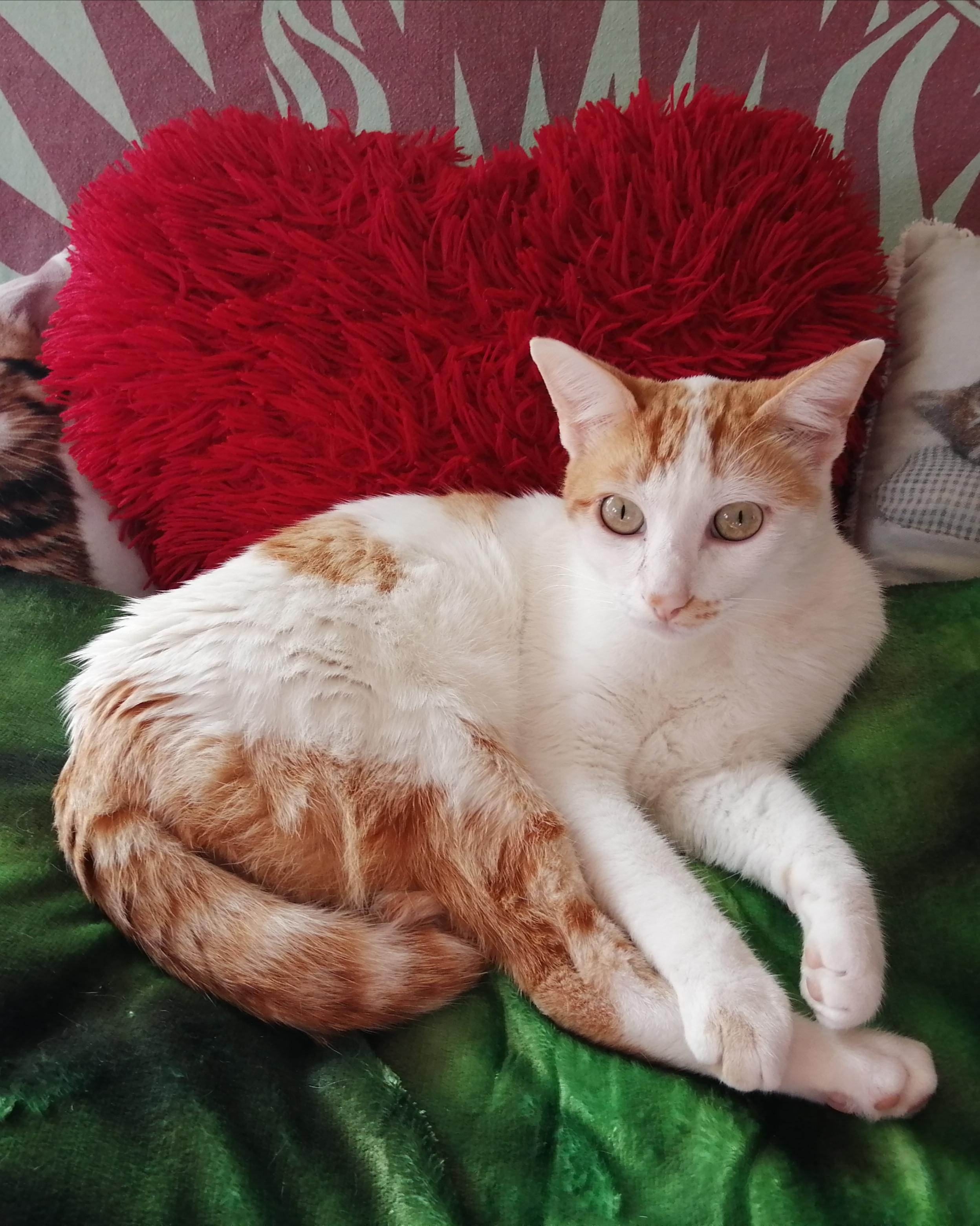 psicologa de gatos almeria