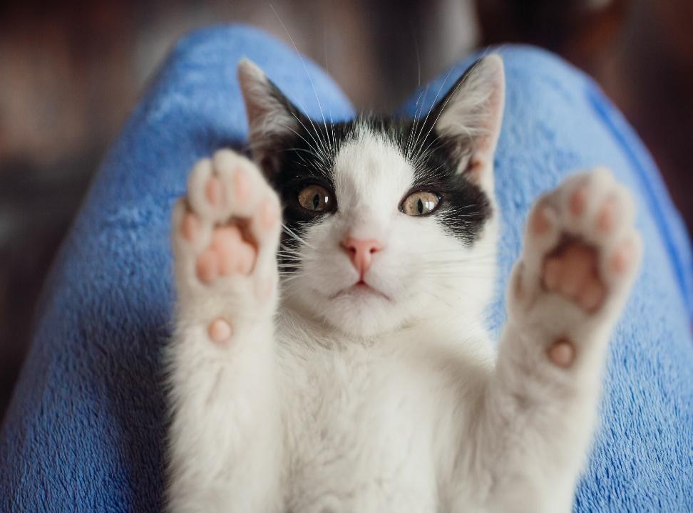 psicologa de gatos